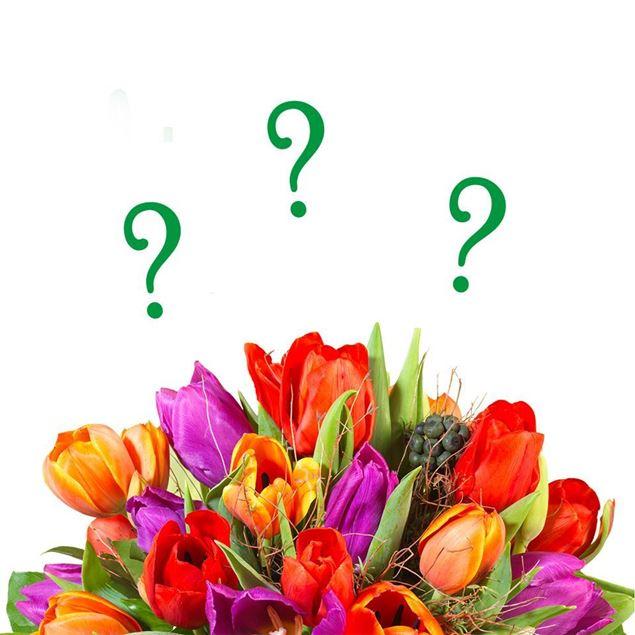 Bild von Schweizer Tulpen Überraschungsfarbe von Rutishauser (15er-Bund)