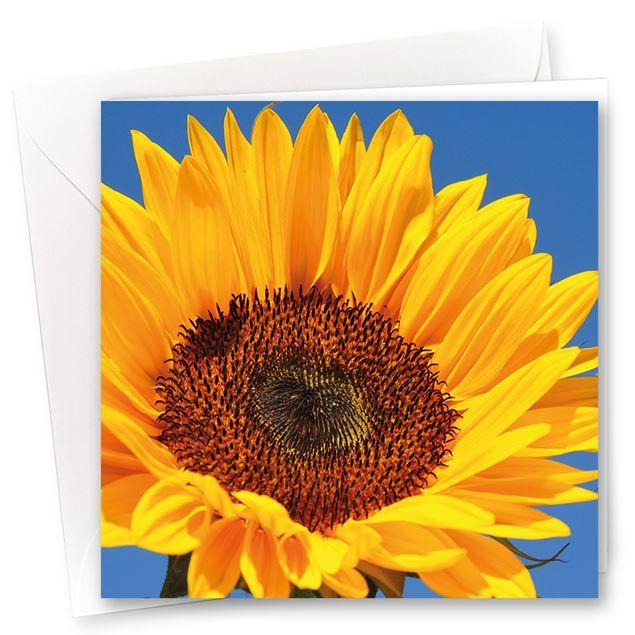 """Karten """"Sonnenschein"""" (10er- Set)"""