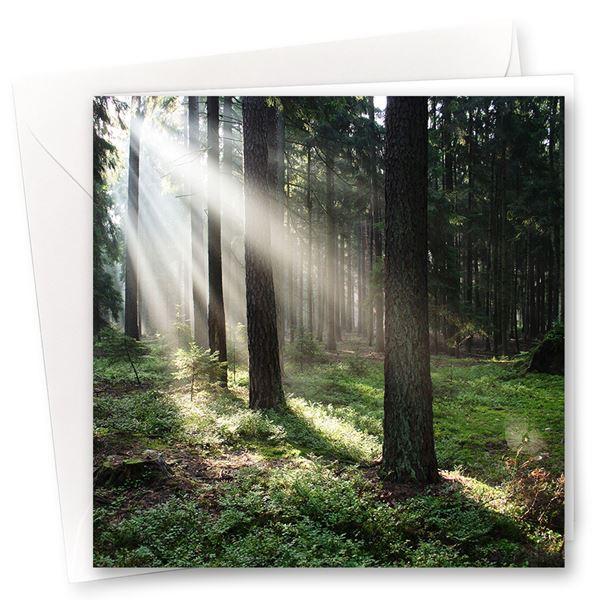 """Karten """"Im Wald"""" (10er- Set)"""