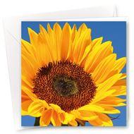 Karte Sonnenblume