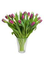 Schweizer Tulpen rosa/pink von Rutishauser (15er-Bund)