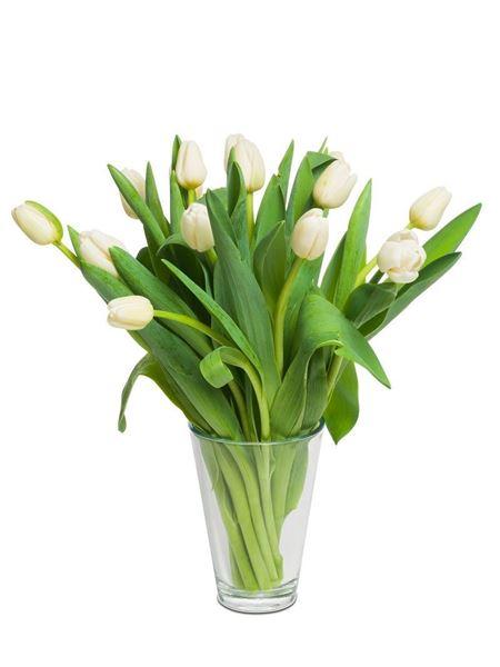 Schweizer Tulpen weiss von Rutishauser (15er-Bund)