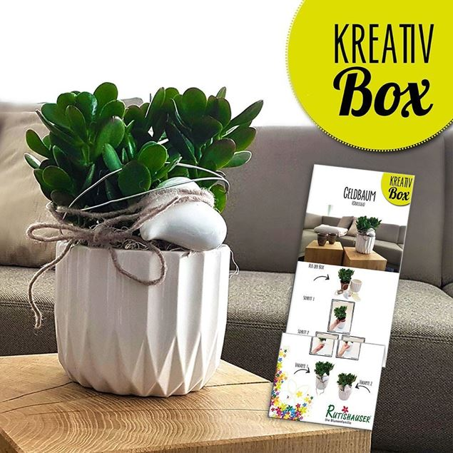 Bild von Kreativ-Box Geldbaum von Rutishauser