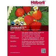 Image sur Plant de fraises DIAMANTE 3x 6er shell