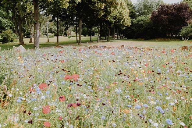 Bild für Kategorie Saisonale Blumen