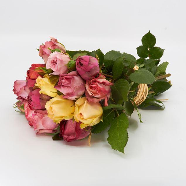 Image de Rose champ 'couleurs différentes' 25cm 10 pièces