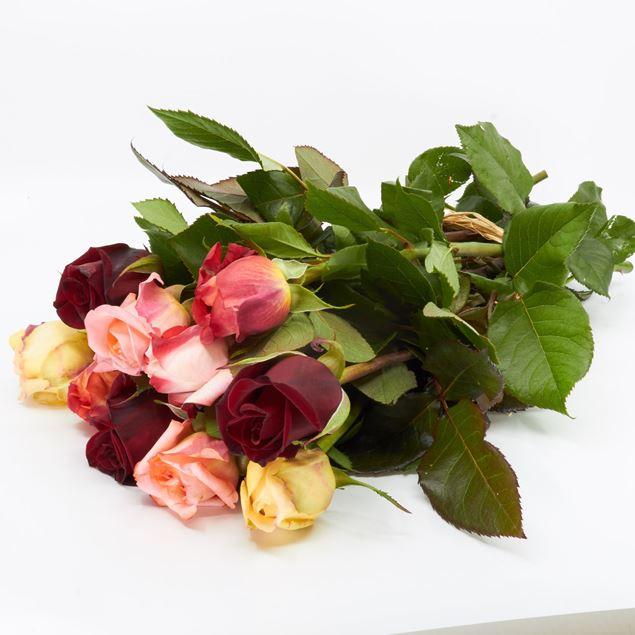 Image de  Rose champ 'couleurs différentes' 45cm 10 pièces