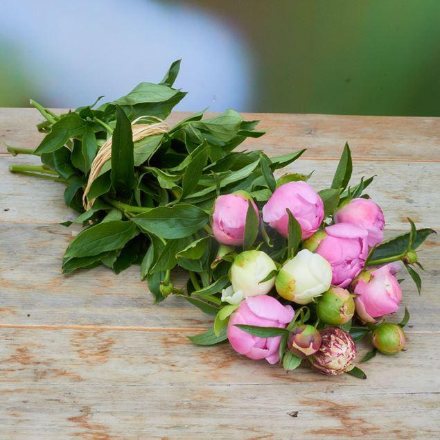 Image de Pivoine 'fraîchement du jardinier' assorti 10 pièces