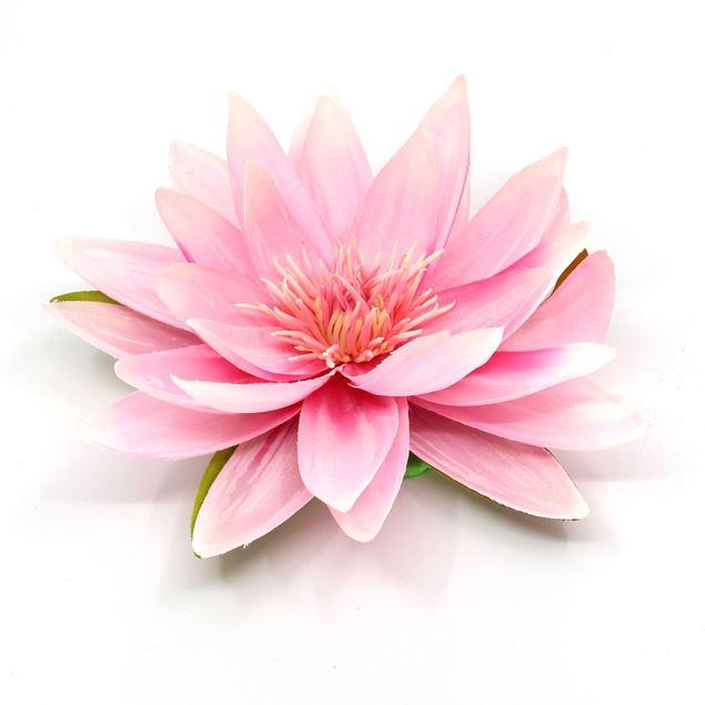 Bild von Seerose mit 5 Blätter Rosa Ø 16cm