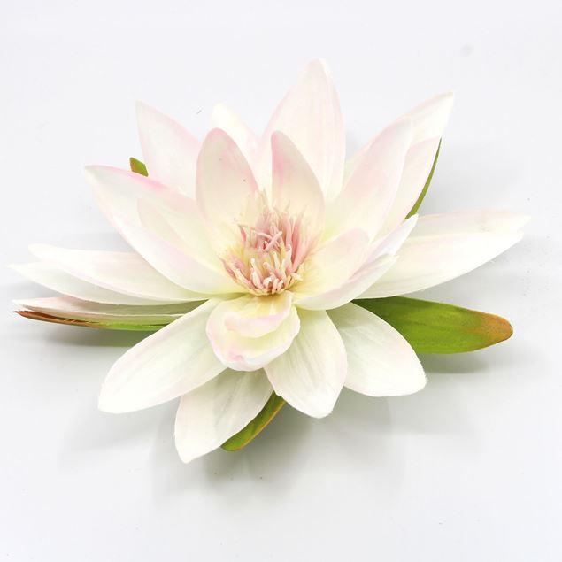 Bild von Seerose mit 5 Blätter Weiss Ø 16cm