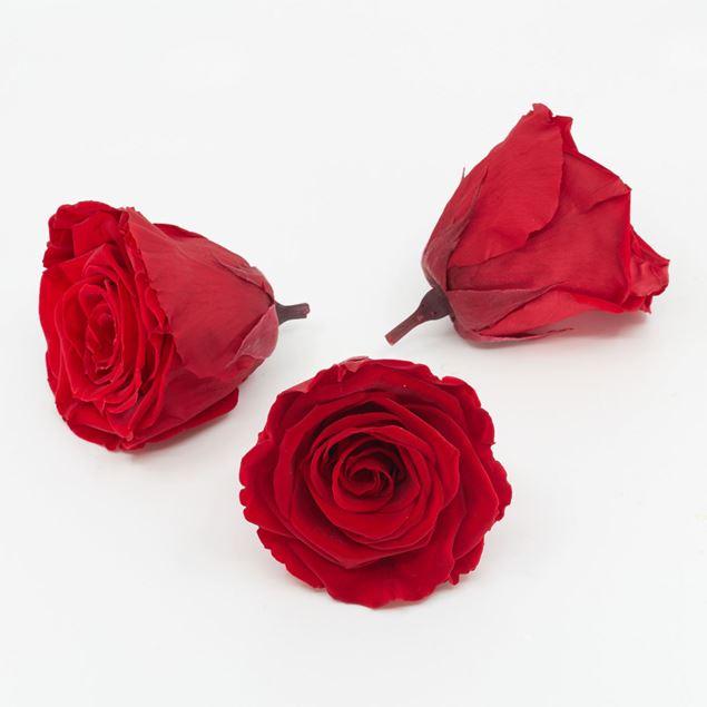 Bild von Gefriergetrocknete Rose 'rot' Ø6cm h5cm 3er Set