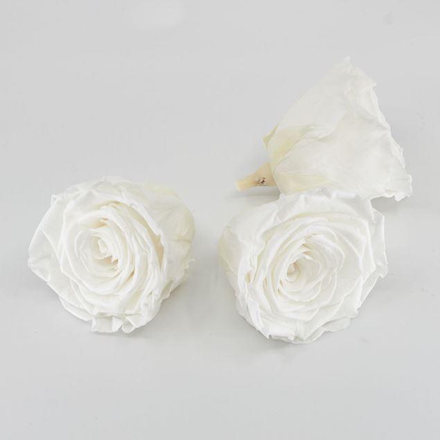 Image de Rose lyophilisée 'blanche' Ø6cm h5cm 3 pièces