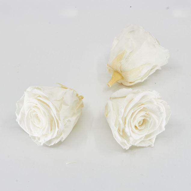 Image de Rose lyophilisée  'ivoire' Ø6cm h5cm 3 pièces