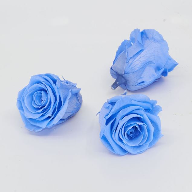 Image de Rose lyophilisée 'bleu' Ø6cm h5cm 3 pièces