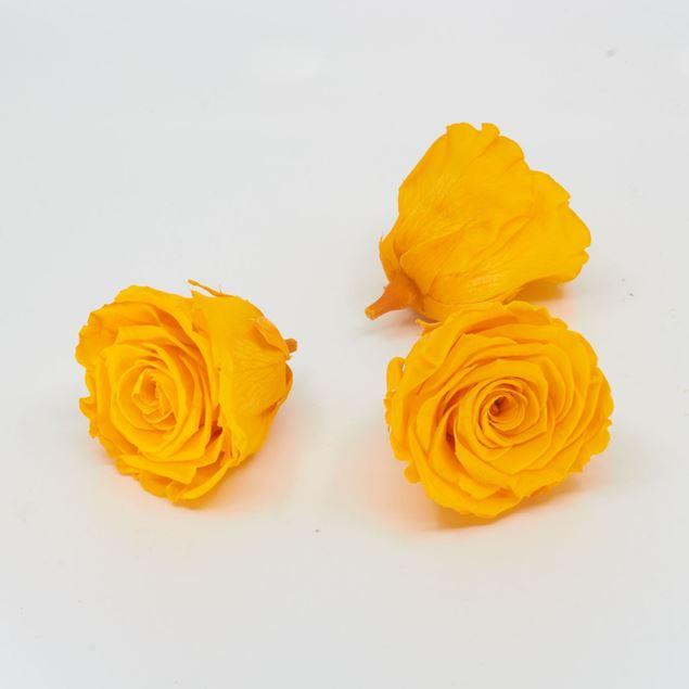 Image de Rose lyophilisée 'jaune' Ø6cm h5cm 3 pièces