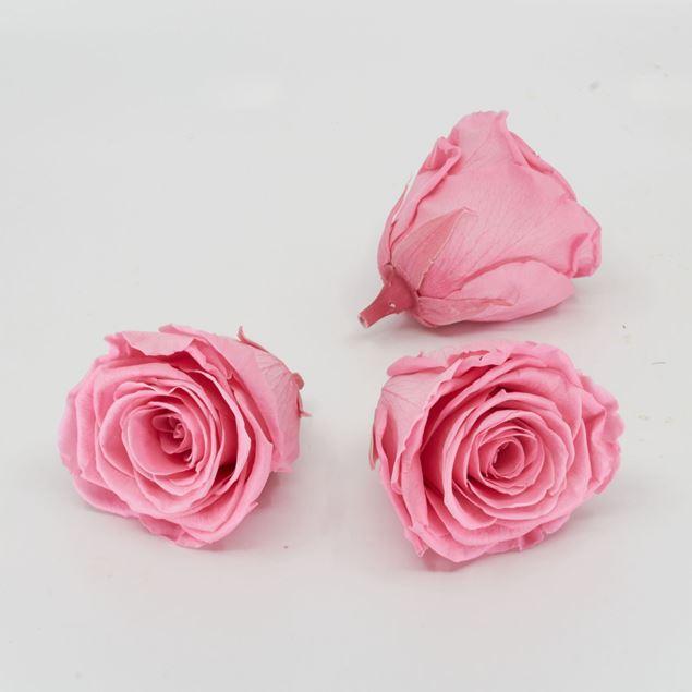 Bild von Gefriergetrocknete Rose 'rosa' Ø6cm h5cm 3er Set