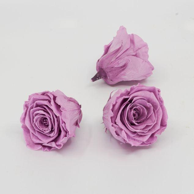 Image de Rose lyophilisée 'violet' Ø6cm h5cm 3 pièces