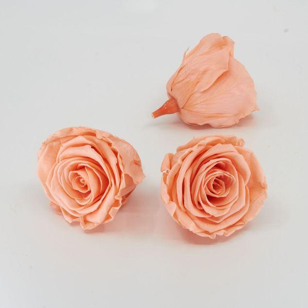 Image de Rose lyophilisée 'pêche' Ø6cm h5cm 3 pièces