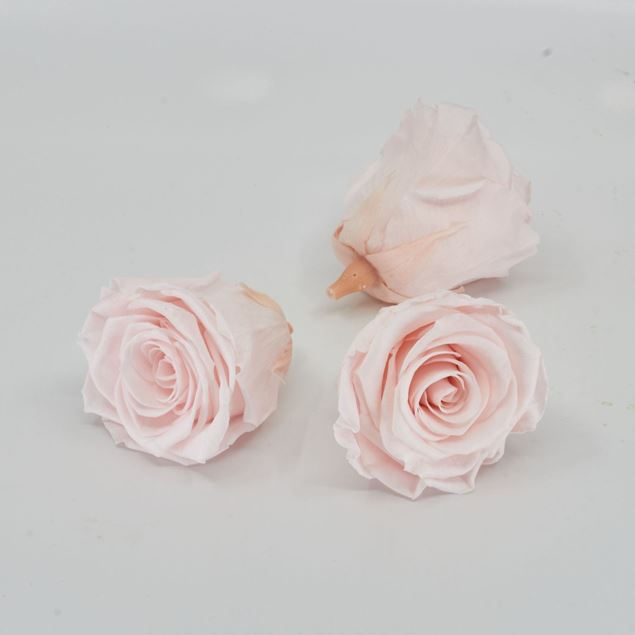 Image de Rose lyophilisée 'rose clair' Ø6cm h5cm 3 pièces