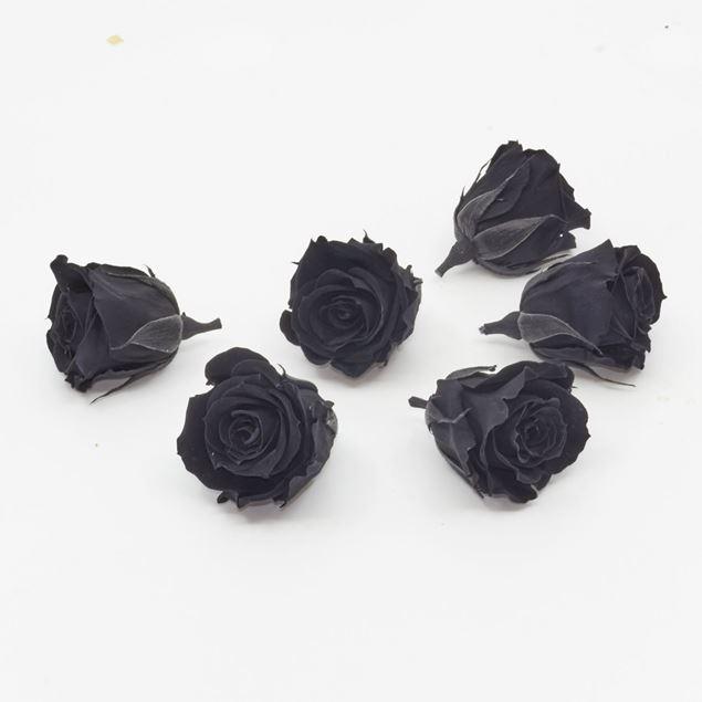Bild von Gefriergetrocknete Rose mini 'schwarz' Ø4cm h3.5cm 6er Set