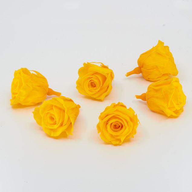 Image de Rose lyophilisée mini 'jaune' Ø4cm h3.5cm 6 pièces