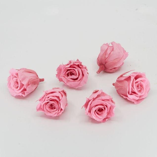 Bild von Gefriergetrocknete Rose mini 'rosa' Ø4cm h3.5cm 6er Set