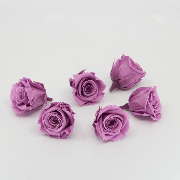 Image de Rose lyophilisée mini 'violet' Ø4cm h3.5cm 6 pièces
