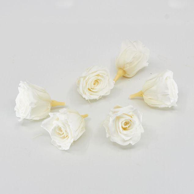 Image de Rose lyophilisée mini 'ivoire' Ø4cm h3.5cm 6 pièces