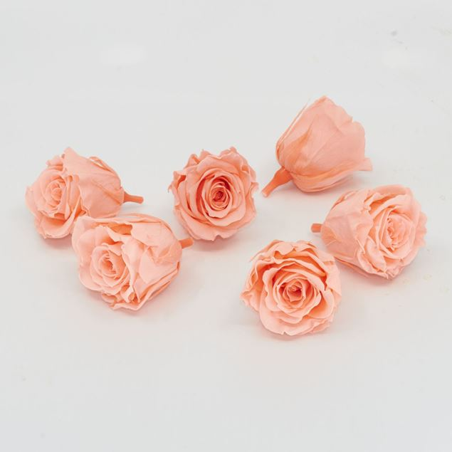 Image de Mini-rose lyophilisé 'pêche' Ø4cm h3.5cm 6 pièces