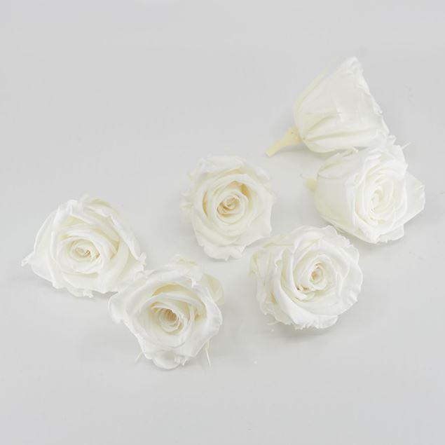 Image de Rose lyophilisée mini 'blanche' Ø4cm h3.5cm 6 pièces