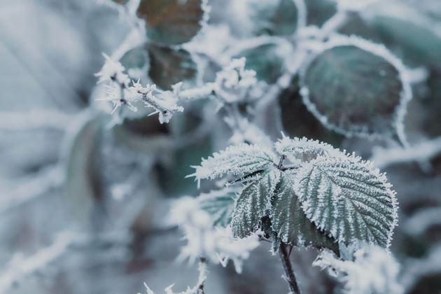 Image de la catégorie Protection hivernale des plantes
