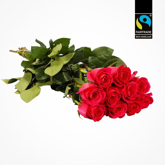 Edelrose pink 50cm Fairtrade Max Havelaar blume 3000