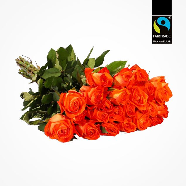 Rosen orange  50cm Fairtrade Max Havelaar blume 3000