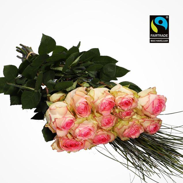Bild von Edelrosen weiss/rosa 50cm 20 Stk mit Bärengras - blume 3000