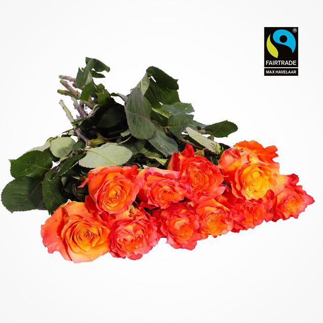 Edelrosen orange 50cm 10 Stk - blume 3000