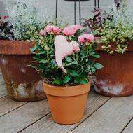 Rosenpflanze mit Herz im Cachepot