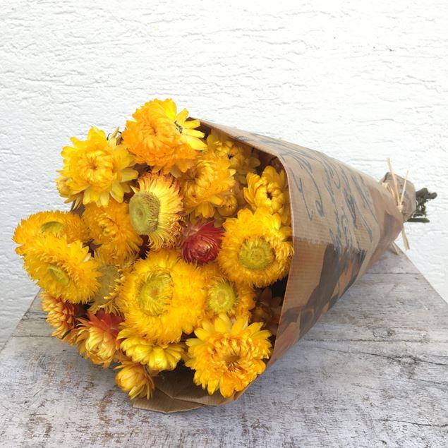 Trockenblumen Bund Helichrysum (Strohblumen) gelb