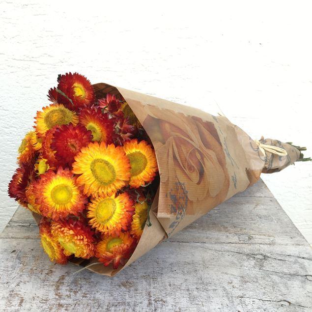 Trockenblumen Bund Helichrysum (Strohblumen) orange