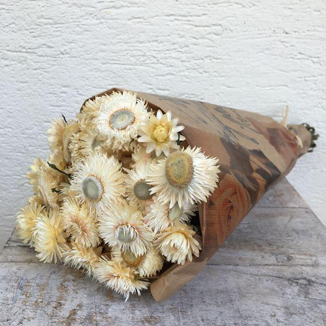 Trockenblumen Bund Helichrysum (Strohblumen) creme