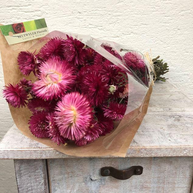 Trockenblumen Bund Helichrysum (Strohblumen) pink
