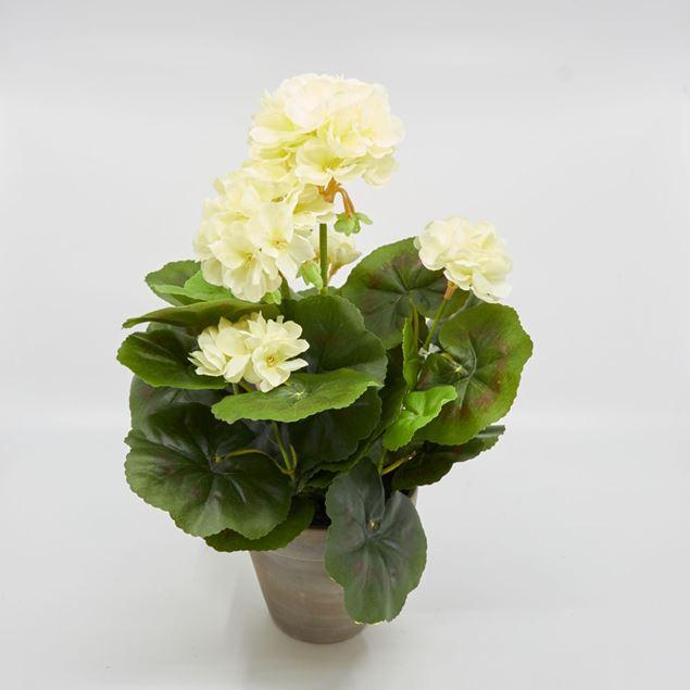 Image de Géranium dans le pot 'artificiel' crème