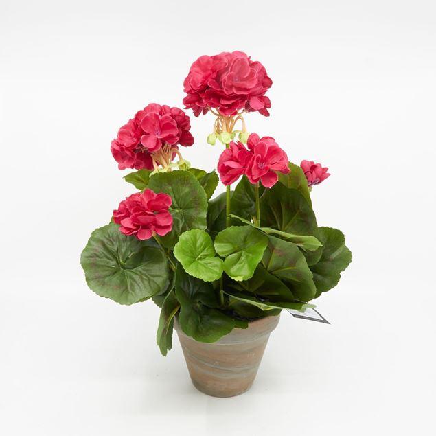 Image de Géranium dans le pot 'artificiel' rose foncé