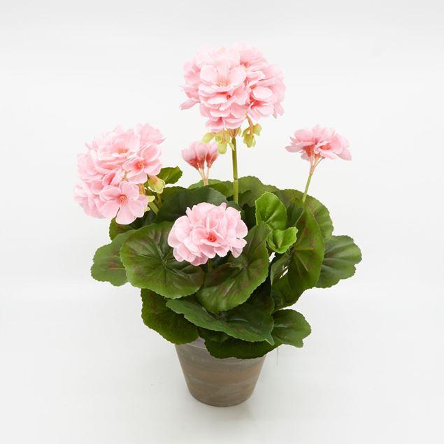 Image de Géranium dans le pot 'artificiel' rose