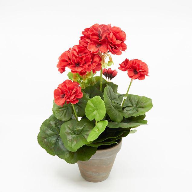 Image de Géranium dans le pot 'artificiel' rouge
