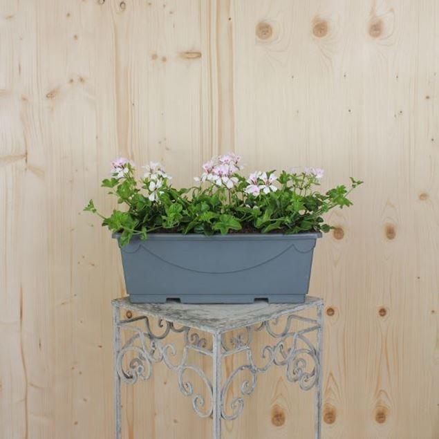 Pelargonium peltatum Blumenkiste 40 cm, weiss zurück zu Produkten