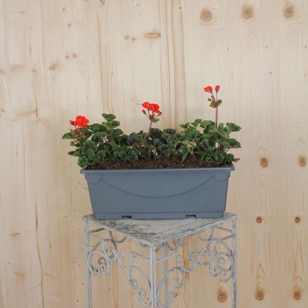 Pelargonium zonale Blumenkiste 40 cm, rot
